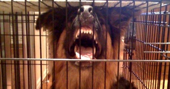 Dog Territory Aggression Dog Puppy Behavior Training Help