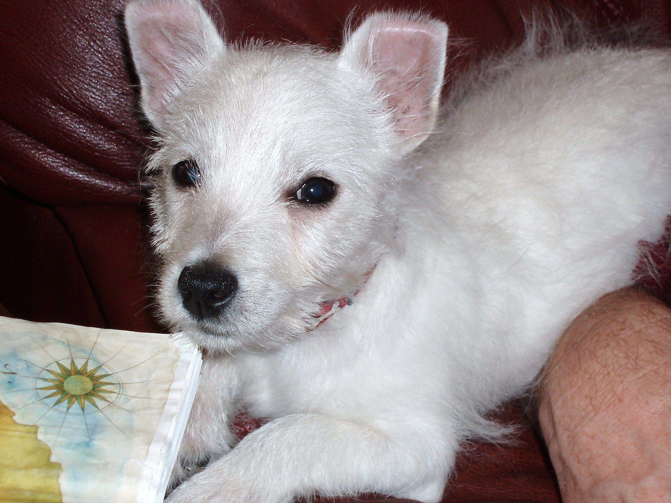 Dog Puppy Behavior Training Help