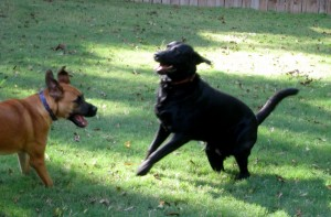 dog_fight